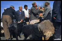 Sheep for sale at the Sunday Market. Hotan, Xinjiang, China