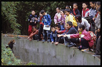 Chinese children watching a lesser (red) Pandas. Chengdu, Sichuan, China