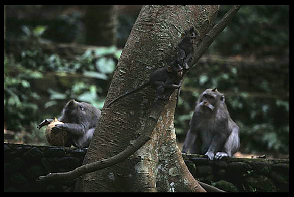A monkey family in Monkey Forest Sanctuary.