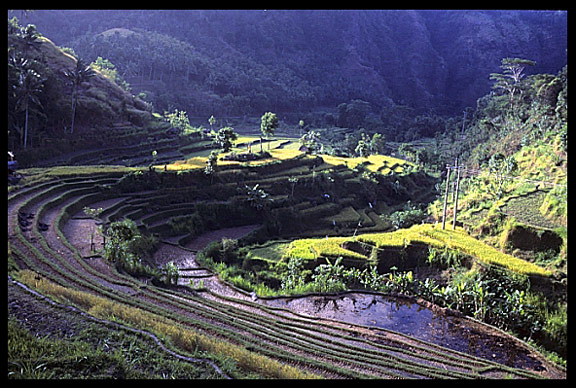 A rice field valley in North-South Bali.