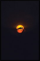 Silhouette of a dragonfly at sunset on the four thousand islands. Si Phan Don, Don Det, Laos