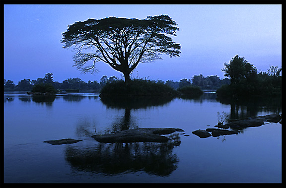 Just before sunrise, silhouette of a tree on the four thousand islands. Si Phan Don, Don Det, Laos