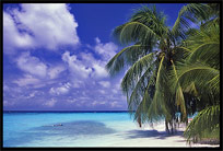 A holiday on one of the many Maldives islands offers good all inclusive hotels on resorts with white sand beaches.