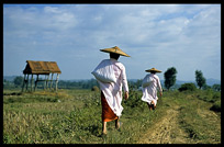 Burmese nuns walking in the field near Hsipaw.