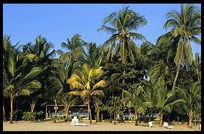 The prisitine beaches backed by swaying palms of Ngapali.
