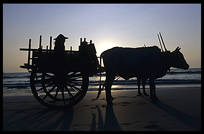 Silhouette of an oxcart during sunset at the beach of Ngapali.