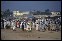 Overview of the Afghan horse market. Peshawar, Pakistan