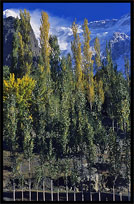 Colorful trees. Karimabad, Hunza, Pakistan