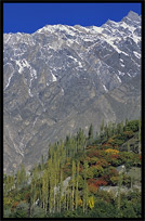 Typical view; blue sky, white peaks and colorful trees. Karimabad, Hunza, Pakistan